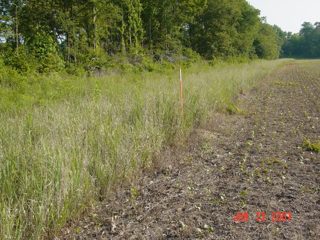 Field Borders in Hardin County, TN