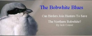 The Bobwhite Blues