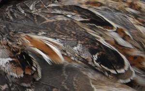 DSCF2419_feathers close up
