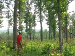 Oak Savanna in Tennessee