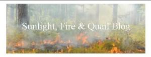 Sunlight, Fire & Quail Blog