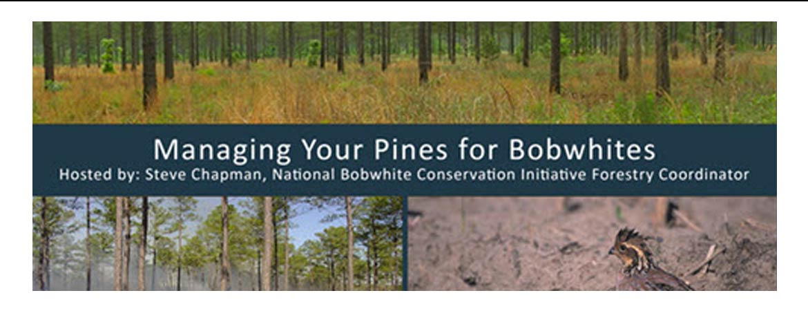 Forest Management for Northern Bobwhite Quail Webinar