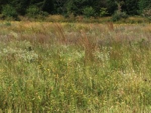 Typical Nesting Grass Density