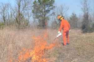 Prescribed fire is an invaluable tool for managing bobwhites. (Photo: Ben Robinson)