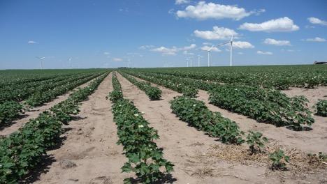 Clean Farming