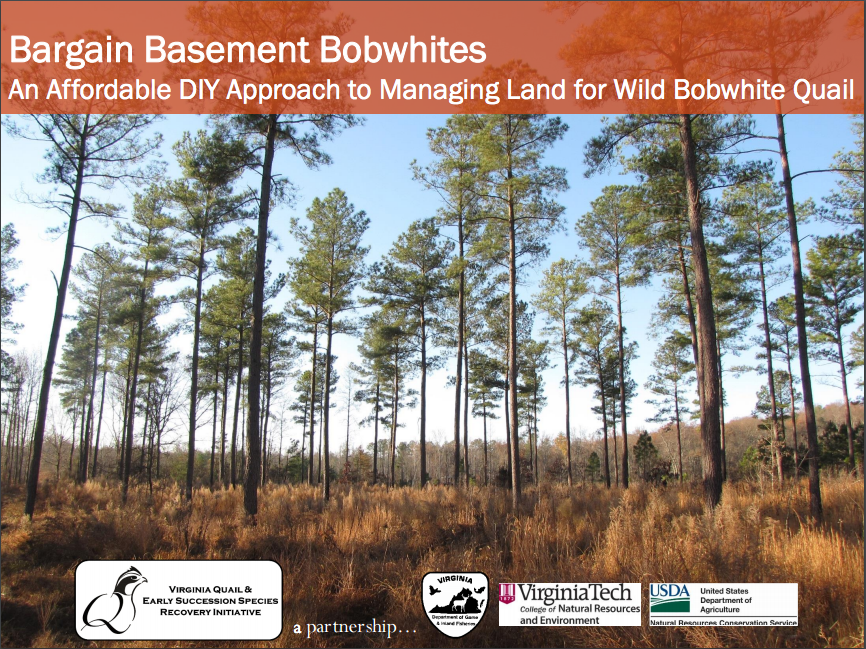 Bargain Basement Bobwhites Cover