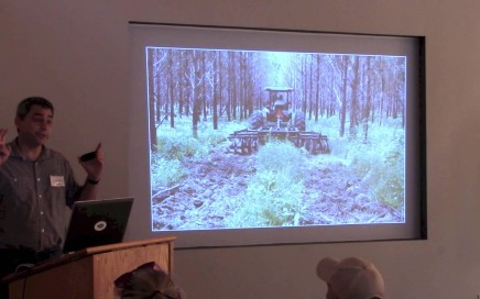 Effects of Native Groundcover on Fire Behavior