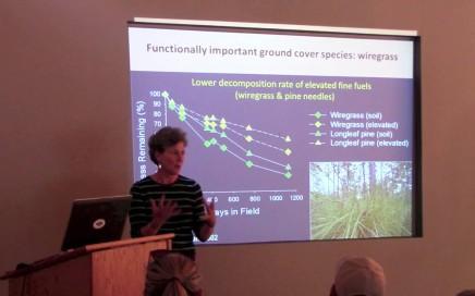 Groundcover Restoration of the Longleaf Pine Ecosystem