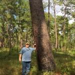 Chapman_Pine Tree