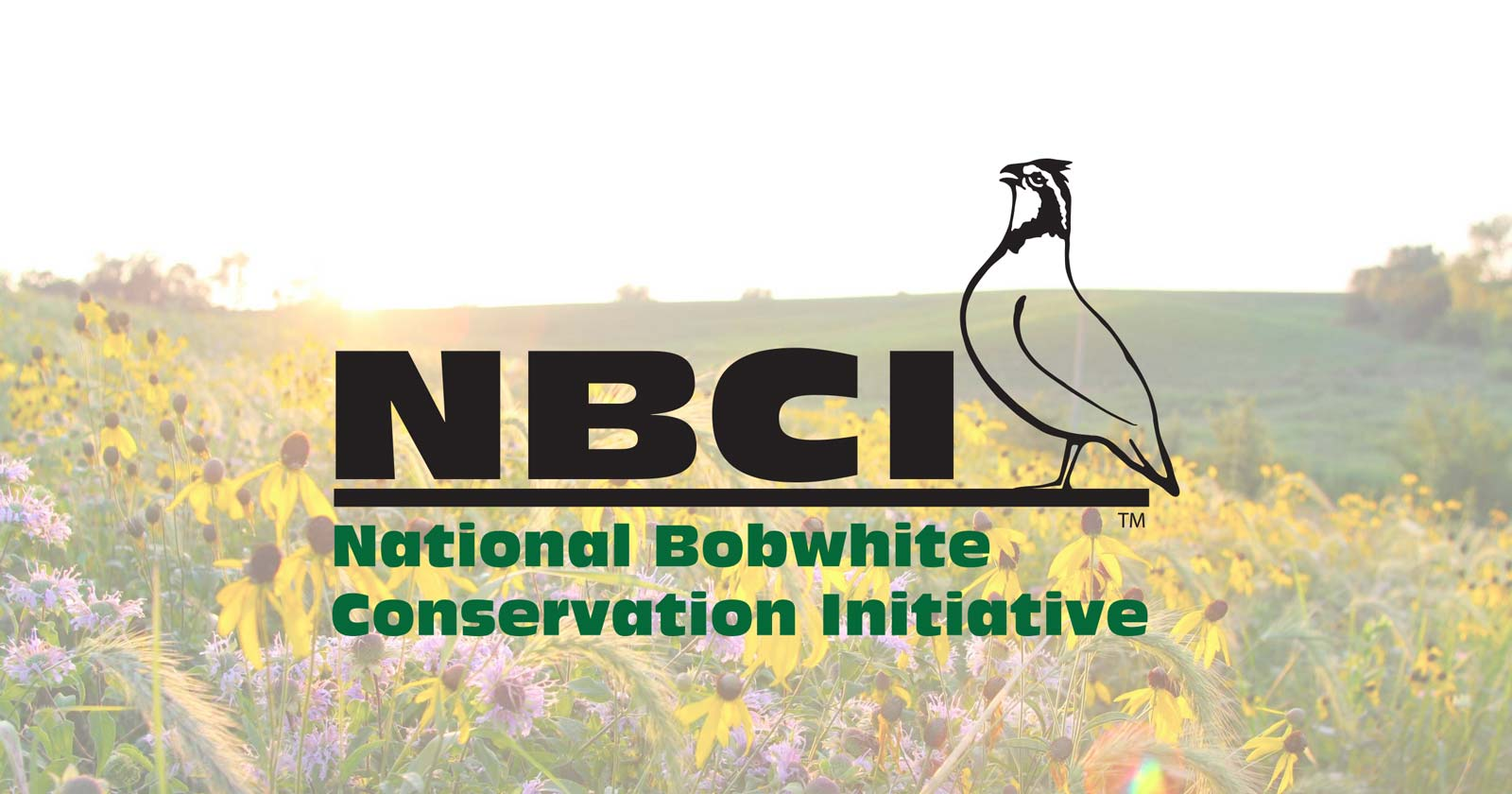 The Bobwhite Roundtable – NBCI