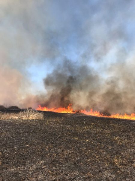 Prescribed burn on Pea Ridge National Military Park. Photo provided by AGFC.