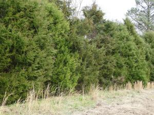 Eastern Red Cedar Hedgerow<br>Gate County, NC<br>Photo by Bob Glennon
